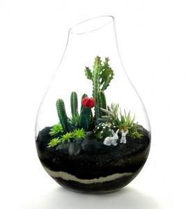 Cactus Terrario By Paloma-Teppa-PLANT-THE-FUTURE-candela-ferro-para-todos-2014