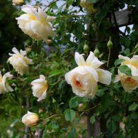 Descanso Gardens volverá a abrir al público el sábado 16 de mayo con nuevas reglas de distancia social en su lugar